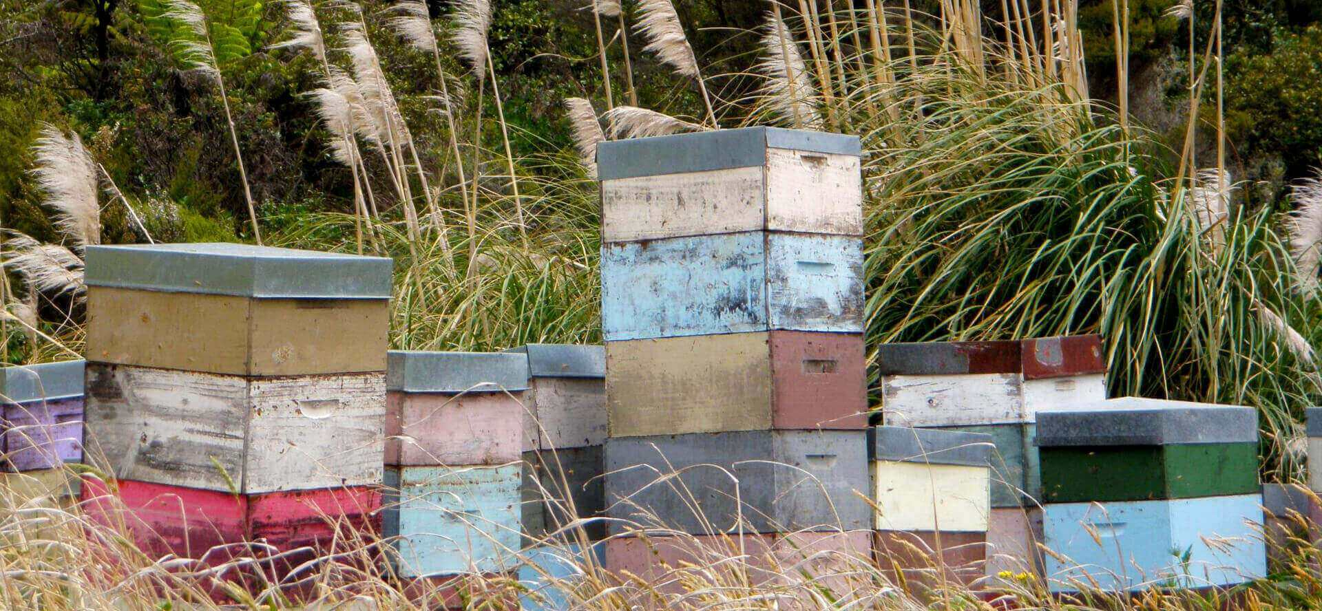 new-zealand-bees