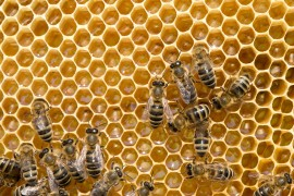 making honey, worker bees