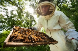 veterans with PTSD, agrotherapy, beekeeping and honey