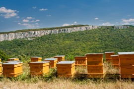 manuka honey, new Zealand's environment, Nuffield
