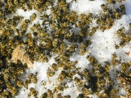 Winter, Honeybees, Vandalism, vandalism