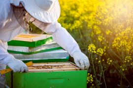 hobby farm, beekeeping, manuka honey