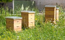 urban beekeeping, beekeepers, honeybees