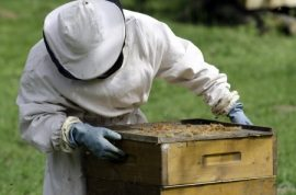 beekeeping, honeybee colonies, USDA