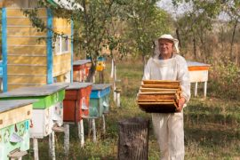 hobbyist beekeeping, honey bees